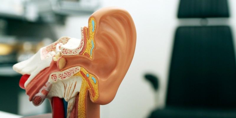 Ohrmodell beim HNO-Arzt