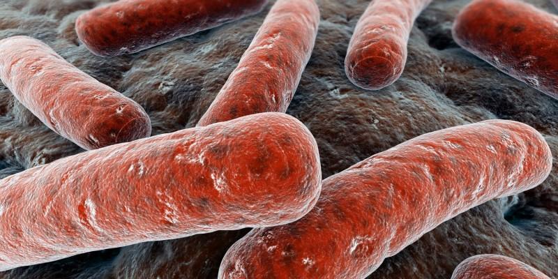 Der Erreger ist ein Bakterium