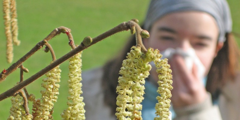 Eine Pollenallergie verursacht den Schnupfen