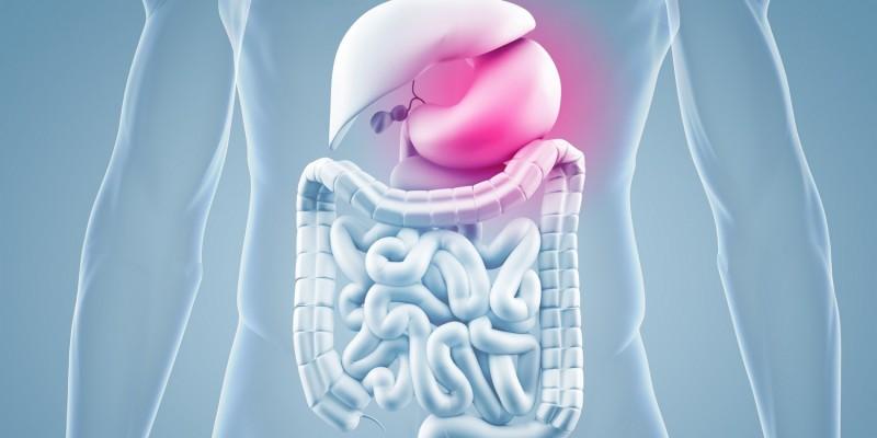 Lage des Magens im Körper