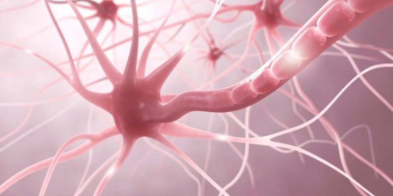Nervenzellen im menschlichen Nervensystem