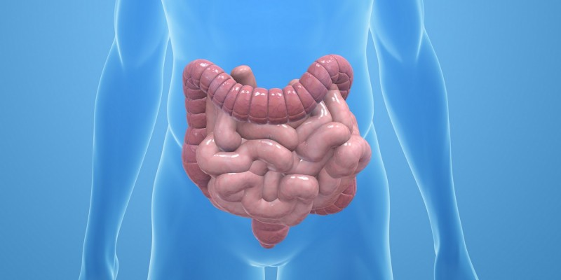 Lage des Darms im Körper