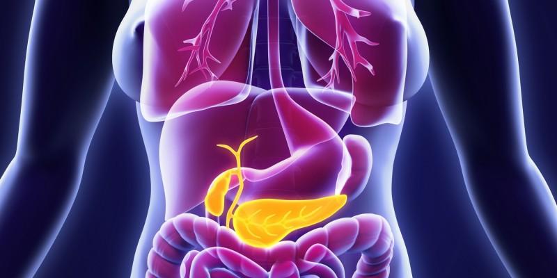 Bauchspeicheldrüse und Gallenblase