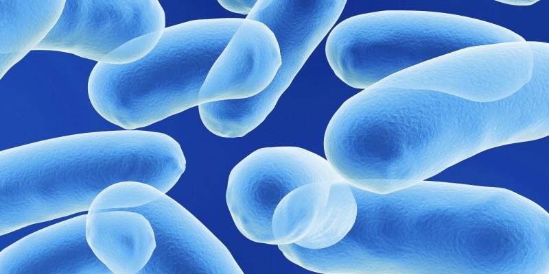 Die Tuberkulose zählt zu den Bakterieninfektionen