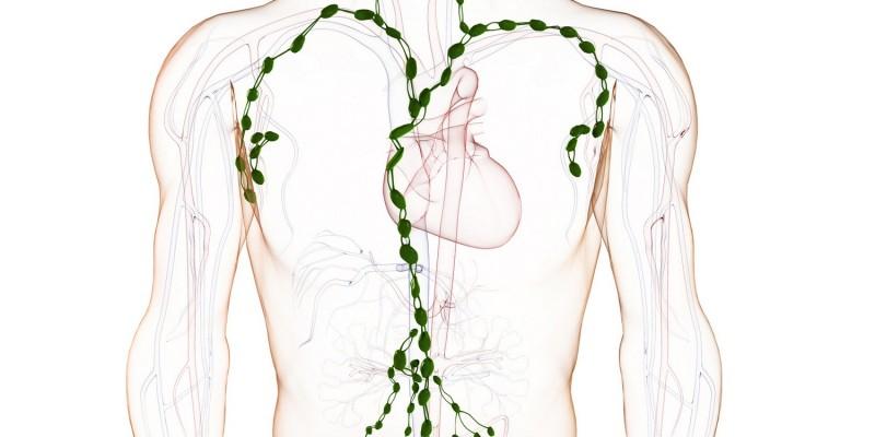 Lymphatisches System beim Menschen