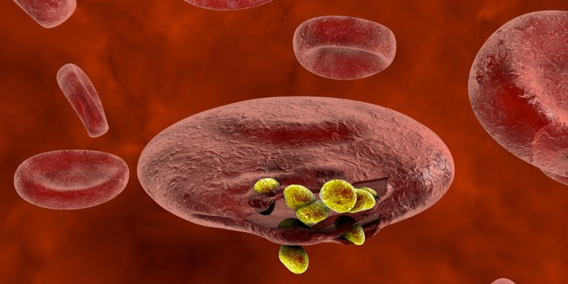 Malaria-Parasiten in einem roten Blutkörperchen