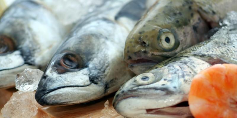 Fisch ist sehr jodhaltig