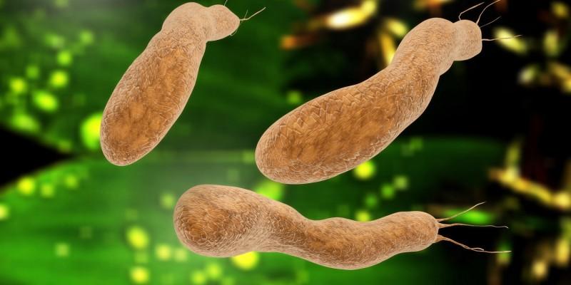 Das Bakterium Helicobacter pylori gilt als möglicher Verursacher von Magenkrebs