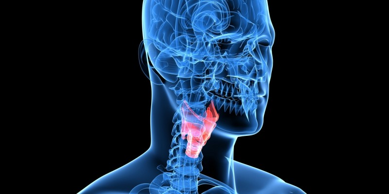 Lage des Kehlkopfes im menschlichen Körper