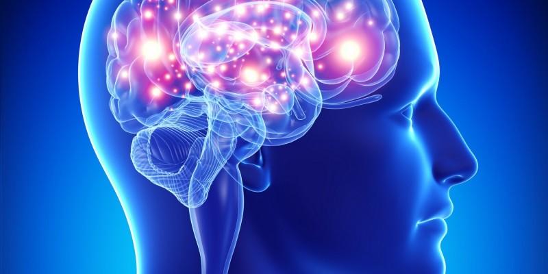 Gehirn mit dargestellter Gehirnaktivität