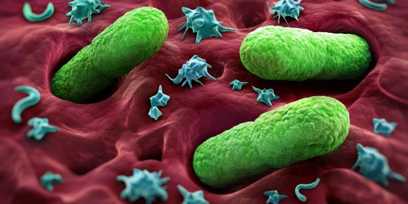 Stäbchenbakterien