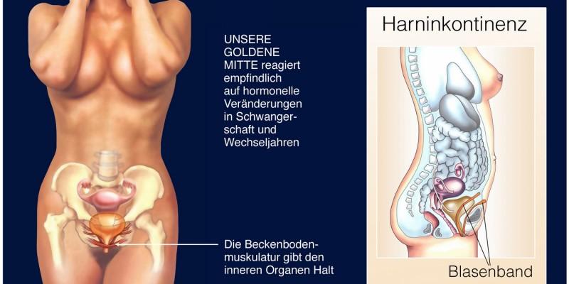 Häufig steckt eine schwache Beckenbodenmuskulatur hinter dem Harndrang