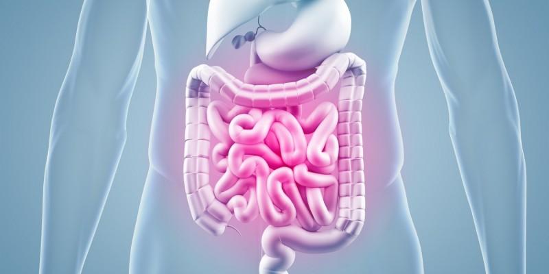 Bei Problemen im Magen-Darm-System kann es zu Appetitlosigkeit kommen