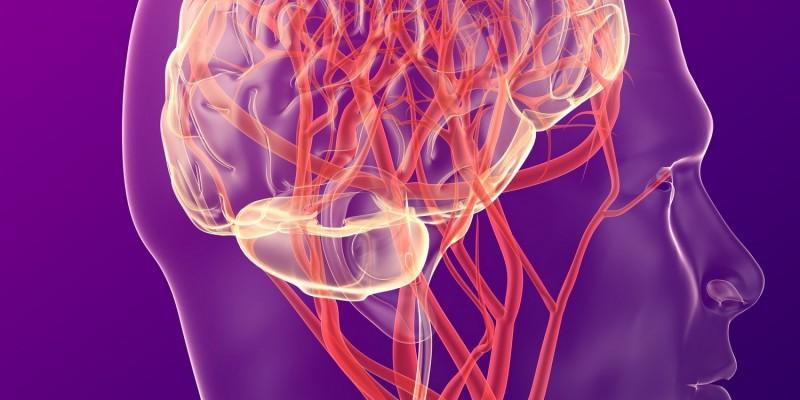 Bei der Ohnmacht ist das Gehirn kurzzeitig mit zu wenig Blut versorgt