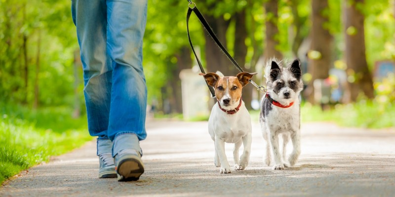 Nicht nur Hunde brauchen viel Bewegung